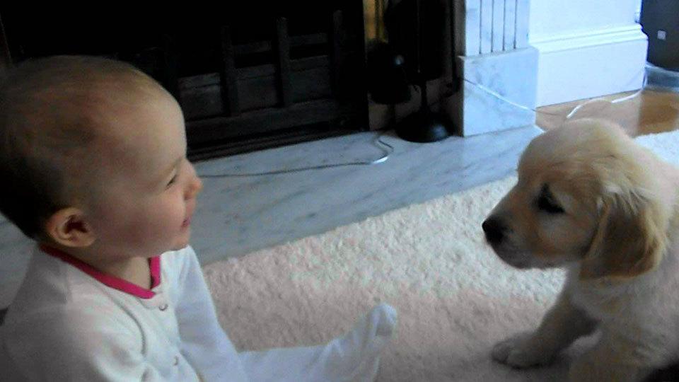Hond ziet baby voor het eerst