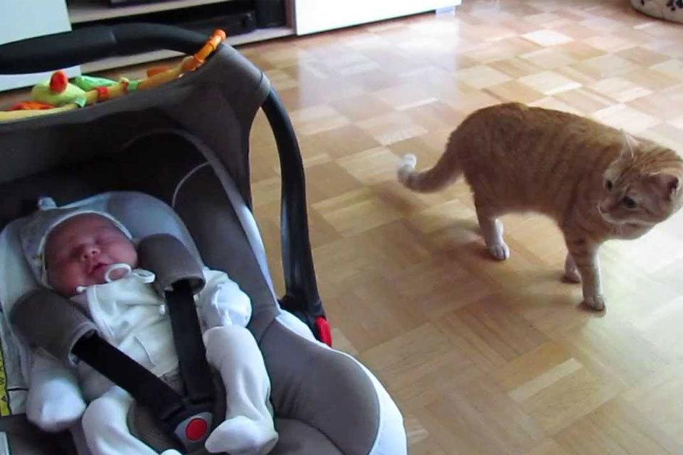 Kat ziet baby voor het eerst