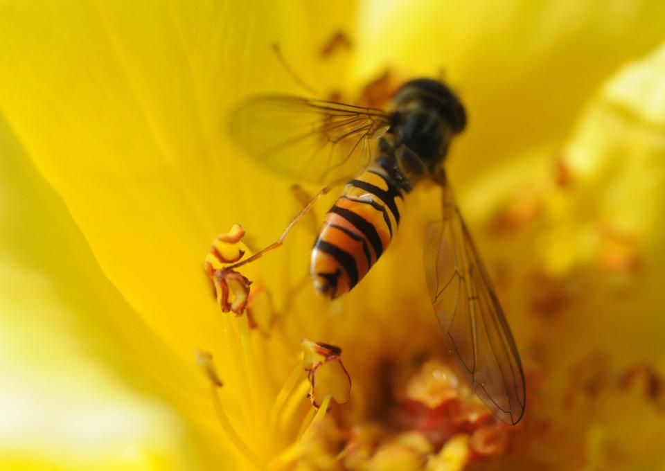 Kind gestoken door hoornaar of wesp